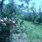 Agropodrinje