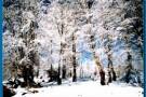 priroda_suma_zimi